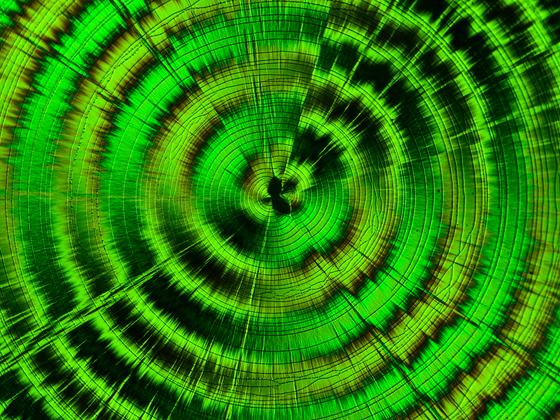 Pol-Spirale