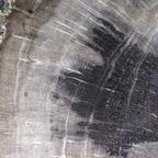 Versteinertes Holz 1,6x