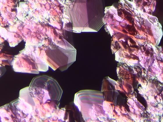 Kobalt(II)-Chlorid