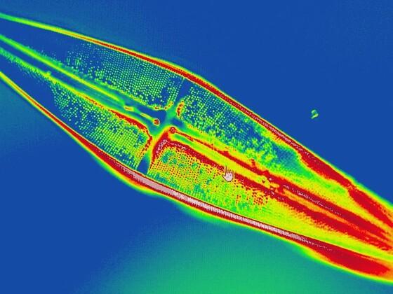Thermo-Diatomee