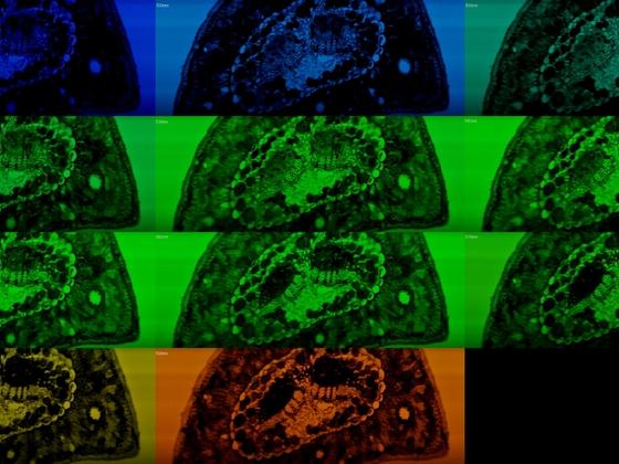 Multispectral Line-Scanning Imaging Microscopy